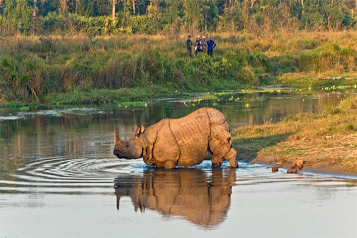 chitwan-national-park-tour1573488322.jpg