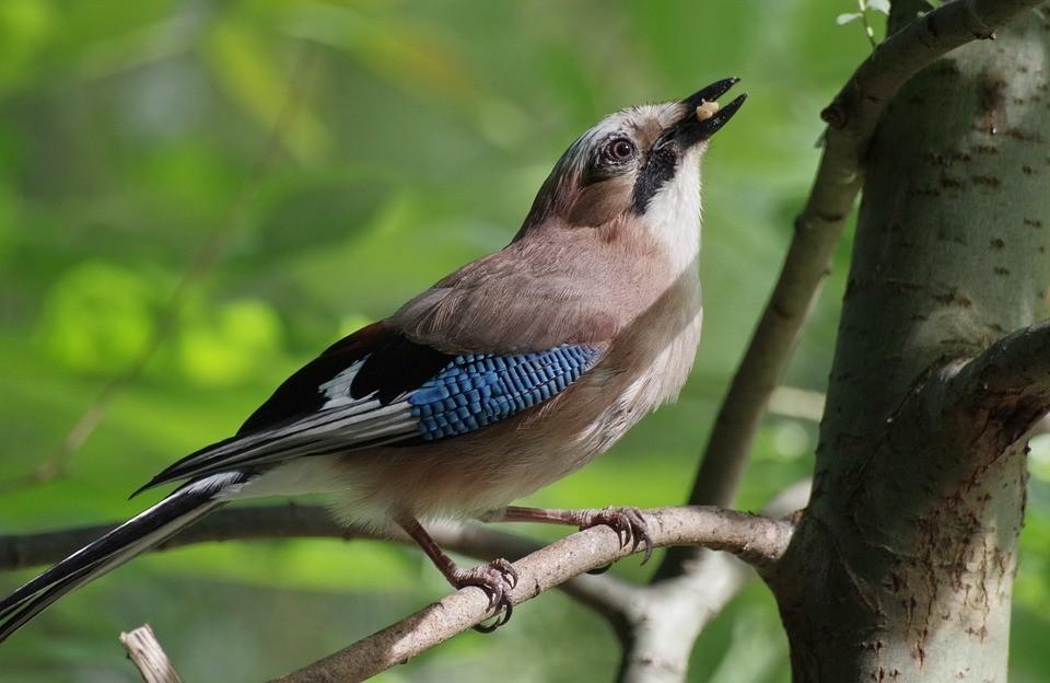 nepal-bird-watching-tour1568266083.jpg